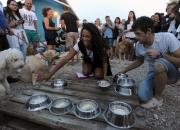 The Edit: At Croatia's canine beach bar, there's beer to go woof about