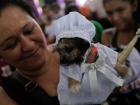 The Edit: Nicaraguans appeal to St Lazarus to cure pet dogs
