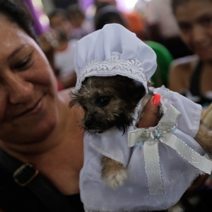 Praying for poochie: Nicaraguans appeal to St Lazarus to cure pet dogs