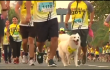 Reuters Video: Dog owners run for 'pet-friendlier' Philippines
