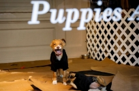 Reuters Video: How much is that puppy in the Saks window?