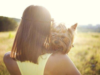 MSIG推出3项宠物保险 生病失踪死亡能获补偿