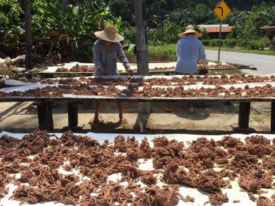 Depleting geragau shrimp supply forcing a halt in Melaka belacan production