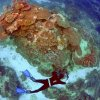 Australia hits out at threatened UN downgrade of Great Barrier Reef