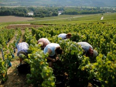 France raises wine output forecast after late Charentes rain