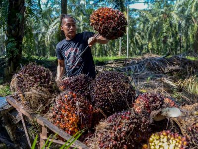 Estate owners' group appeals for review of 'unfair' taxes on palm oil sector