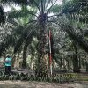 Malaysian Palm Oil Council expects palm oil based oils and fats demand to resume