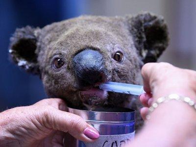 Mobile hospital for injured Australian wildlife hits the road