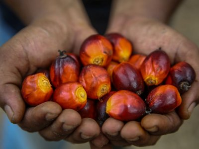 Sarawak oil palm planters oppose MPOB's proposed RM5 cess on CPO for 2021