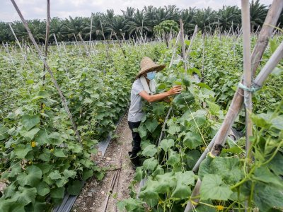 Agriculture sector contributed 1.1pc to Malaysia's GDP in Q3 2020