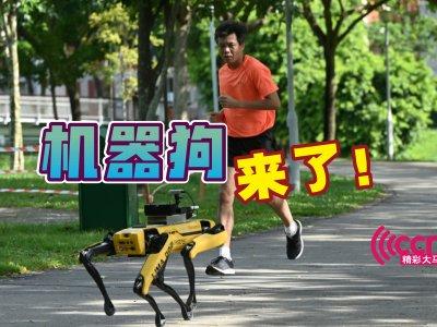 提醒保持社交距离 狮城派机器狗Spot巡公园