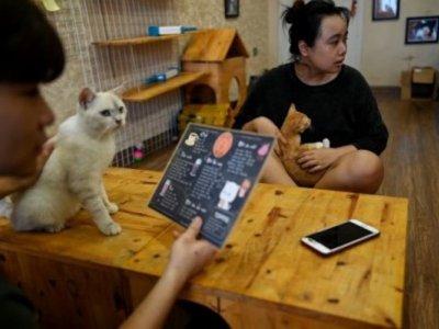 Vietnam cat café offers purr-fect pick-me-up for rescued felines