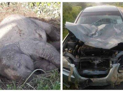让人为之心酸的车祸!母象守小象尸体不愿离开