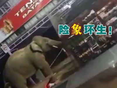 """闯休息区商店觅食! 商家忧野象""""食过番寻味"""""""