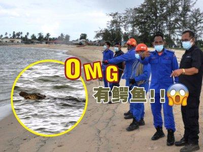 瓜拉勿述海滩突现鳄鱼踪影 村民惊呆报案求助!