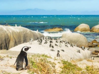 Galapagos sees record rise in penguins, flightless cormorants
