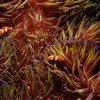 澳洲发现新巨型珊瑚礁 比国油双峰塔还要高!