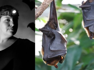 Virus hunter Kendra Phelps explains why bats are not to blame for Covid-19 pandemic (VIDEO)