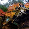 Fall feast: A taste of Japan's autumnal flavours