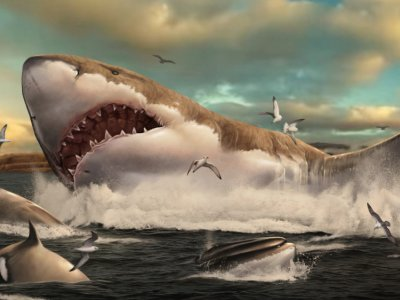 Study: Prehistoric mega-shark raised its young in nurseries