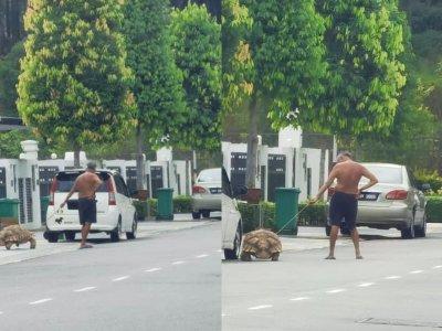 """还在遛狗?男子""""霸气""""牵巨龟散步吸引目光"""