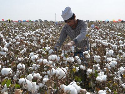 US bans cotton imports from China producer XPCC citing Xinjiang 'slave labour'