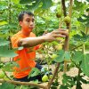 #FarmToPalm: How two friends left a career in audit and started selling fresh figs in Malaysia