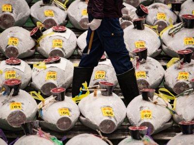 Pandemic overshadows Japan's New Year tuna auction