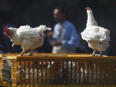 全球首例!俄罗斯7人感染H5N8禽流感