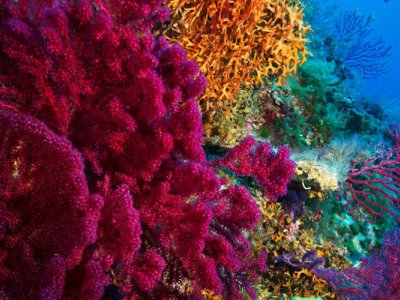 Study: A coral's colour may tell of its resilience to climate change
