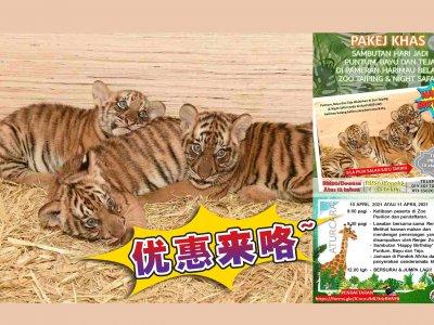 庆马来亚虎3幼崽生日 太平动物园推优惠配套