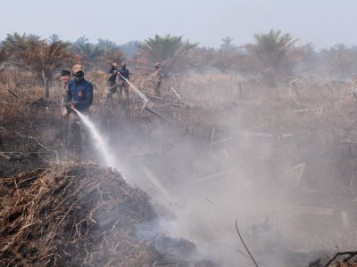 Kuala Langat Selatan forest fire spreads to over 40 hectares, says Selangor Fire Dept