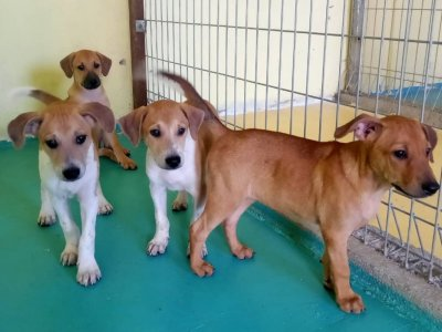 MDDB appeals to public to adopt rescued puppies to make room for more rescues (VIDEO)