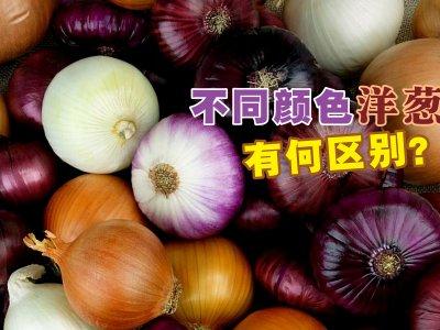 不同颜色洋葱有讲究!营养师教你怎样吃最好