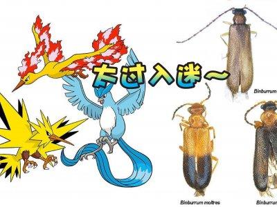 发现3种稀有昆虫!澳学生以传说级宝可梦命名