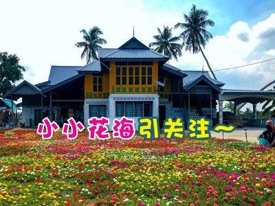 不枉MCO期间天天努力!霹雳马来高脚屋庭院满是日本玫瑰太美了