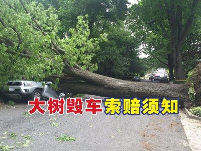 轿车被树压毁怎么办?准备好这些文件即可向政府索赔
