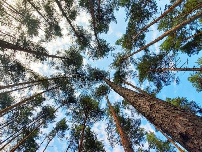 Noise pollution poses long-term risk to trees, study shows