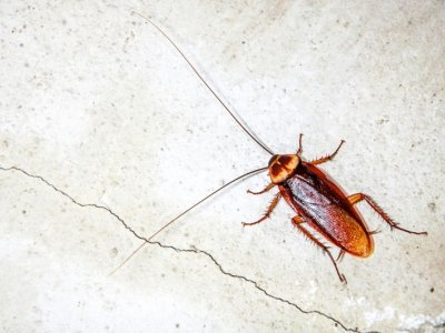 Man in India seeks to end marriage due to wife's fear of cockroaches