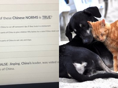 Texas teachers put on admin leave after implying that eating cats and dogs is the 'norm' in China