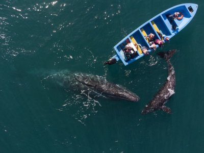 Mexico tourists have whale of a time as pandemic eases