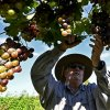 Bolivian wine-growers banking on 'distinctive' altitude flavour