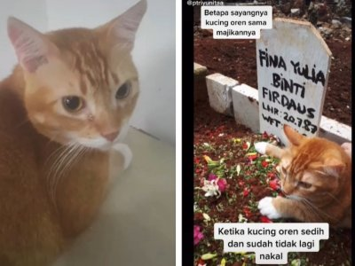 Cat in Indonesia goes viral for 'crying', mourning death of owner