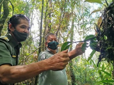 Gunung Alab Substation garden home to more than 100 wild orchid species