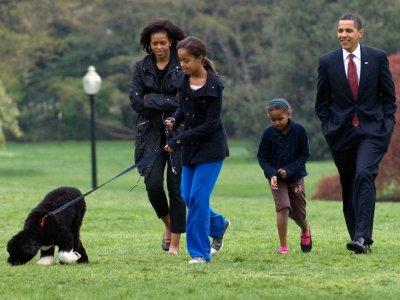 Obama's dog Bo, a star of the White House, dies