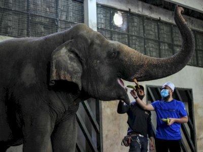 Preacher Ebit Lew donates food to Zoo Negara animals again in light of MCO 3.0