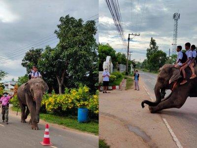 开学搞下气氛!泰国家长让孩子骑大象返校太强了!
