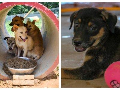 Seremban animal shelter housing 1,900 strays organising virtual run to raise funds for various expenses