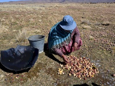 Chuno, the Andean secret to making potatoes last decades