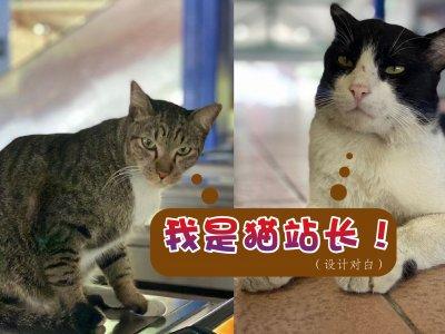 大马也有猫咪站长!快来看看这些小可爱在哪个车站吧!